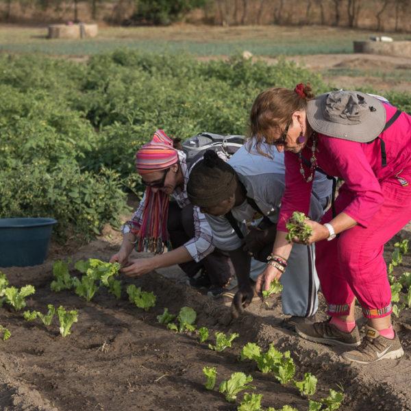 liliane agriculture sénégal voyage participatif
